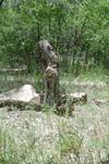 This old tree stump looks almost human!